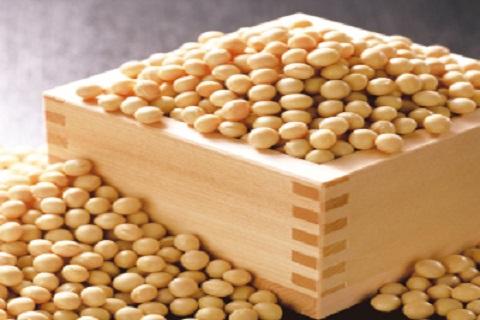 大豆とえんどう豆の違いは?